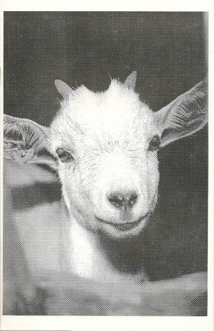 Judas Goat 1995-1996